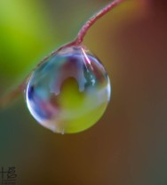 Single dew drop